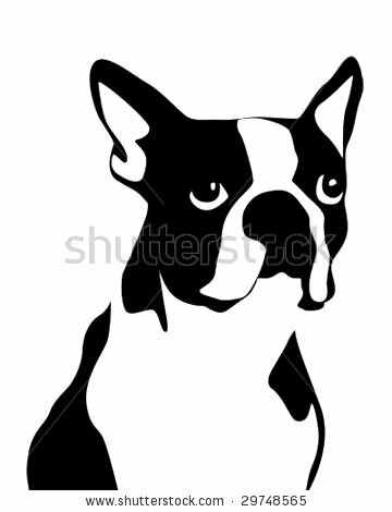 how to draw a boston terrier boston terrier face drawing photo happy dog heaven 7106