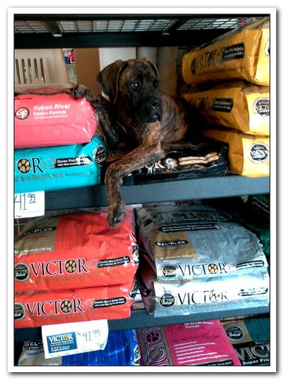 Victor Dog Food Another Top Rated Dog Food Brand Happy Dog Heaven